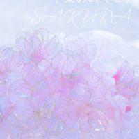 フォーチュンフラワーの桜